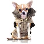 Vêtement  chien