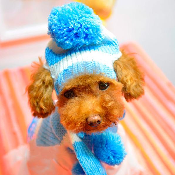 Bonnet et charpe bleu pour chiens canicaprice - Dog hat knitting pattern free ...